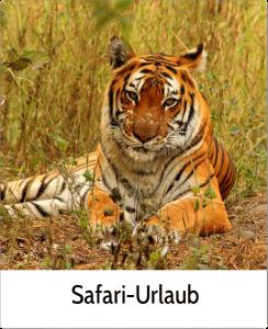 Safari Urlaub Vielfalt Indien