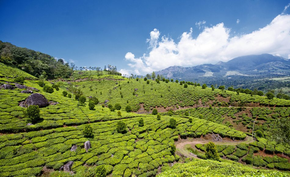 Munnar-Teeplantagen-PaulthyPhtography