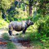 Chitwan National Park_web