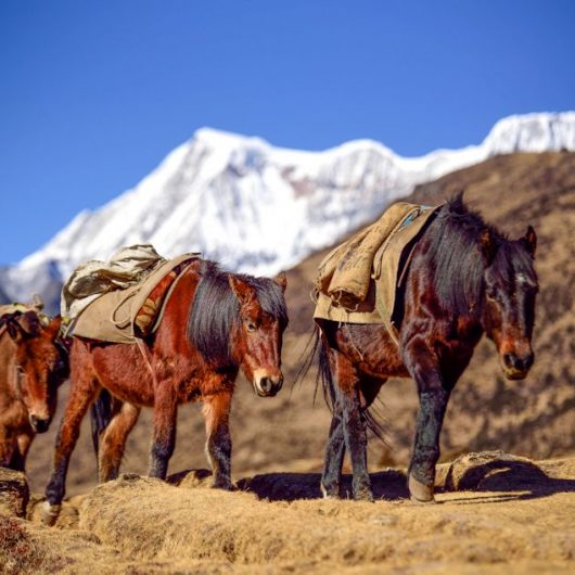 Trekkingreisen in Bhutan