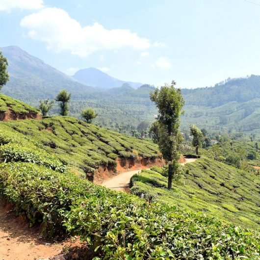 Trekkingreisen in Indien