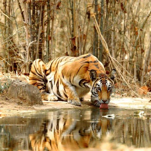 Safarireisen in Indien