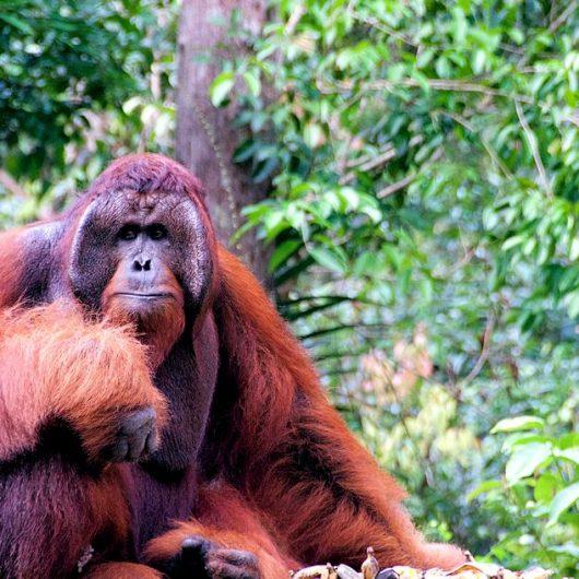 Safarireisen in Indonesien